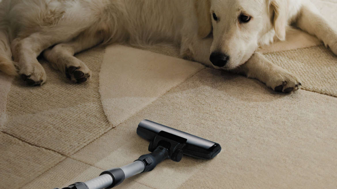 Pet Stain Removal Carpet Cleaning