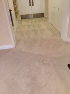 carpet cleaning buena park