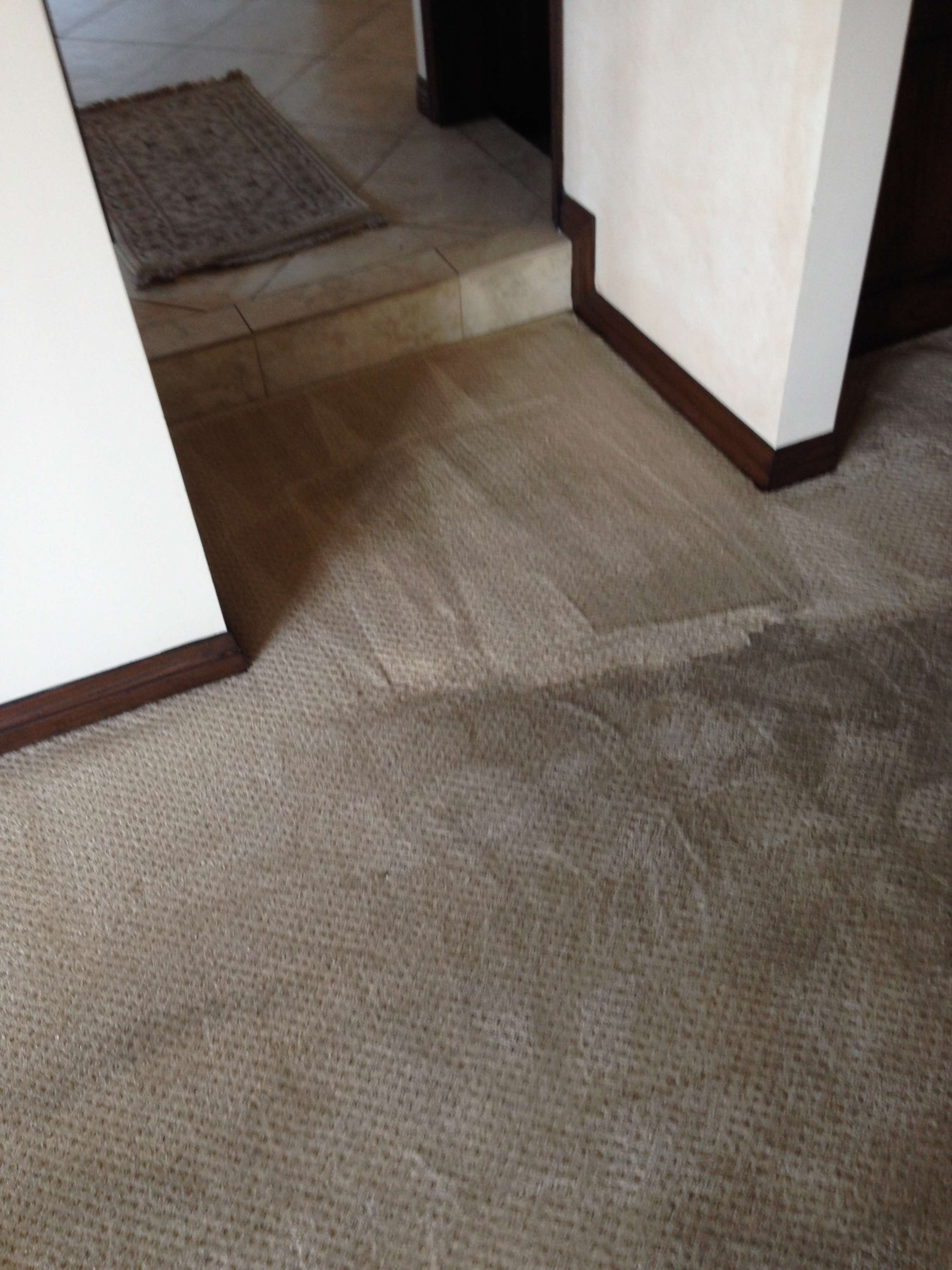 Professional Carpet Cleaner Green Carpet Cleaning Oc