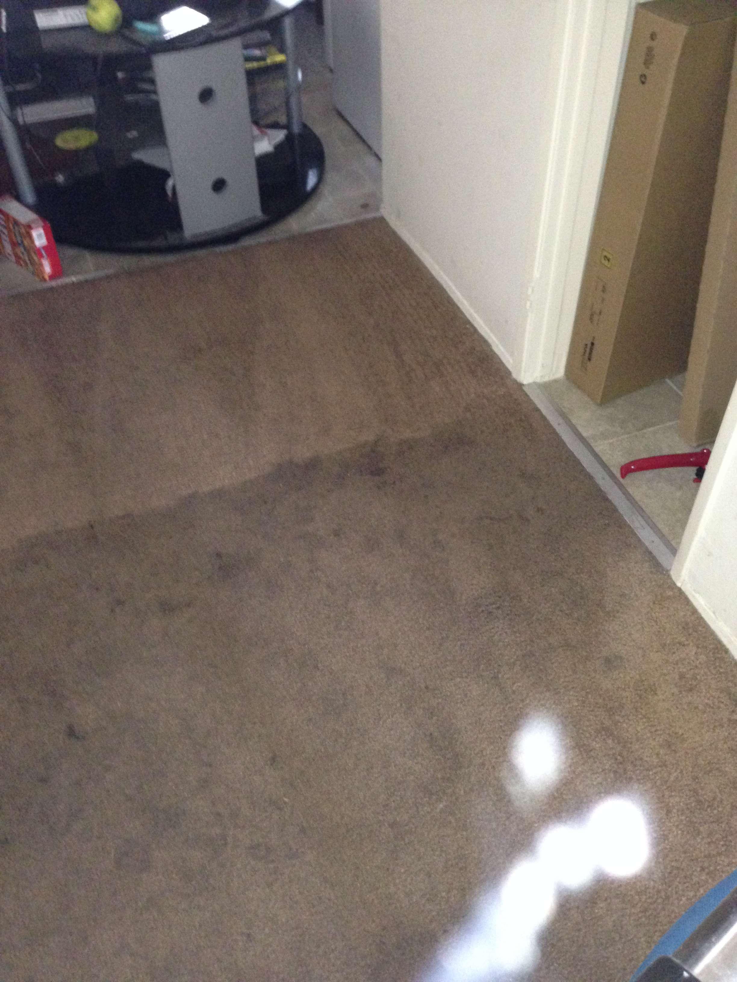 Carpet Cleaning Fullerton Services Green Carpet Cleaning Orange County