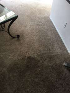 carpet cleaning east irvine