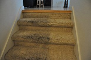 Carpet Cleaning Tustin Services